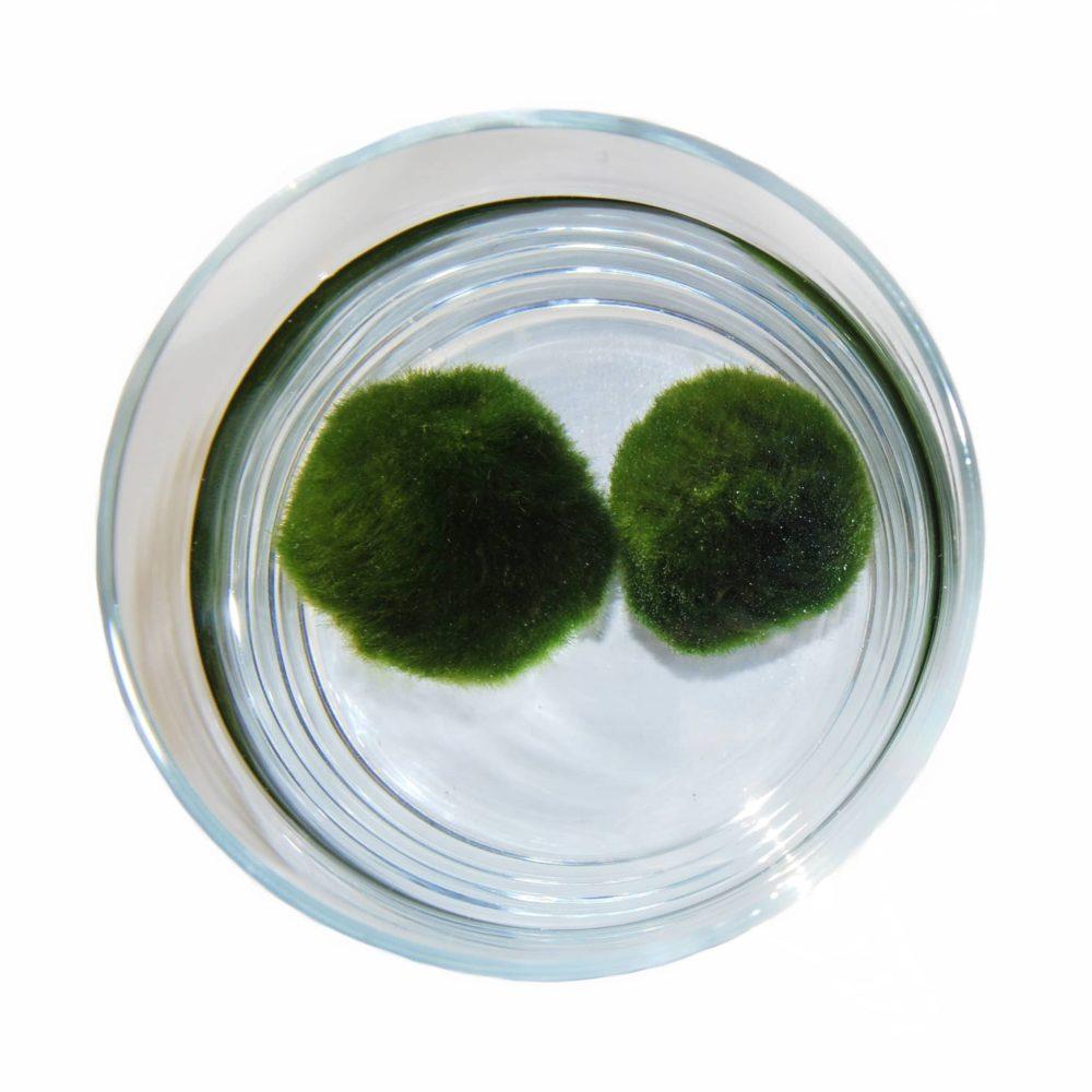 """˂imh src=""""zelený mazlíček.jpg""""alt=""""zelený mazlíček uvístěný ve skleněné nádobě""""˃"""